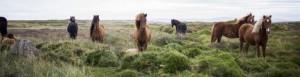 horsesheader